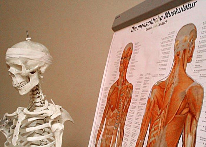 cool-skelett.jpg